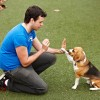 http://www.milkbarmag.com/2014/04/02/dog-human-walking-program/